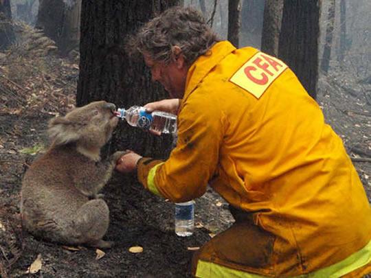 10 lindas fotos de pessoas salvando animais