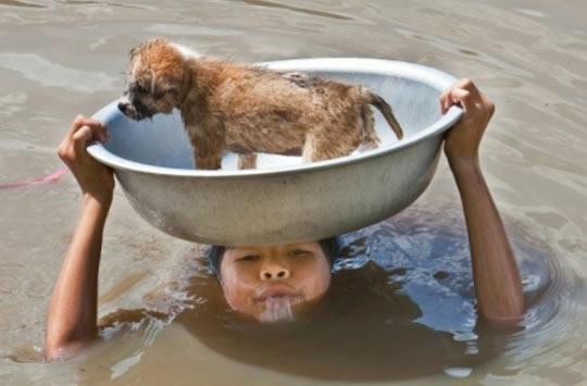 resgate animais 10