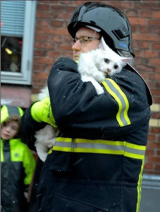 resgate animais 3