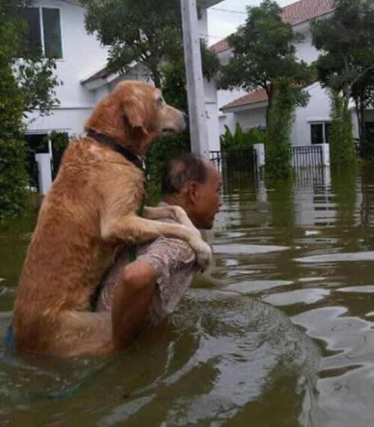 resgate animais 4