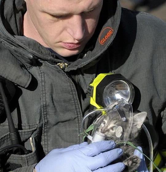 resgate animais 5