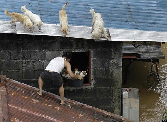resgate animais 6