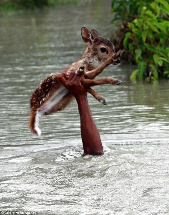 resgate animais 7