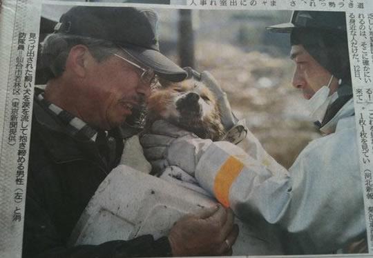 resgate animais 9