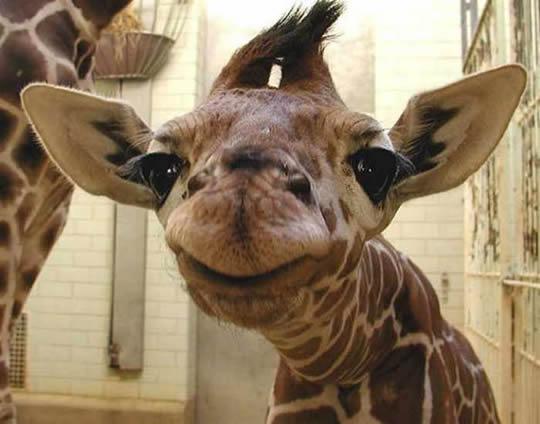 animais-sorrindo-7