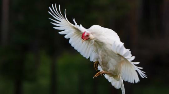10 informações sobre os animais que você vai querer saber