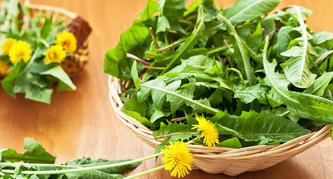 10 flores comestíveis para preparar deliciosos pratos